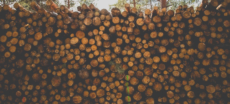 gestapeltes Holz im Wald