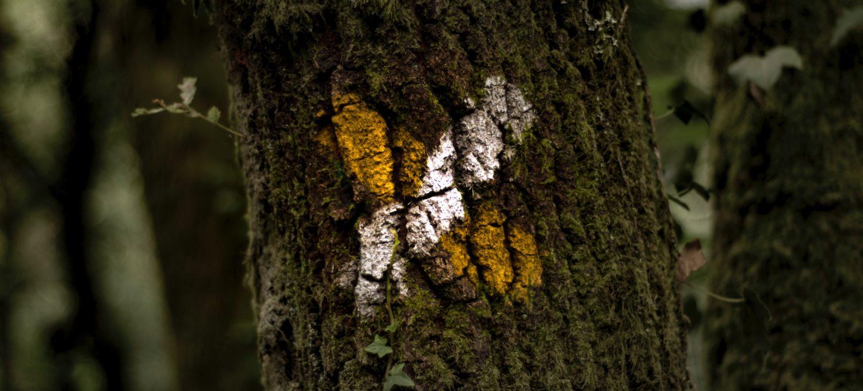 markierter Baum, Siegel